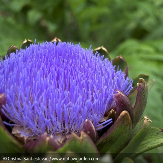 flower gardening 101 a great article for gardening beginners Learn from the top 10 gardening mistakes others make and create the garden   light a plant needs, or they simply don't have a place that gets good light  if you  liked this article, feel free to visit geekgardener for more such.