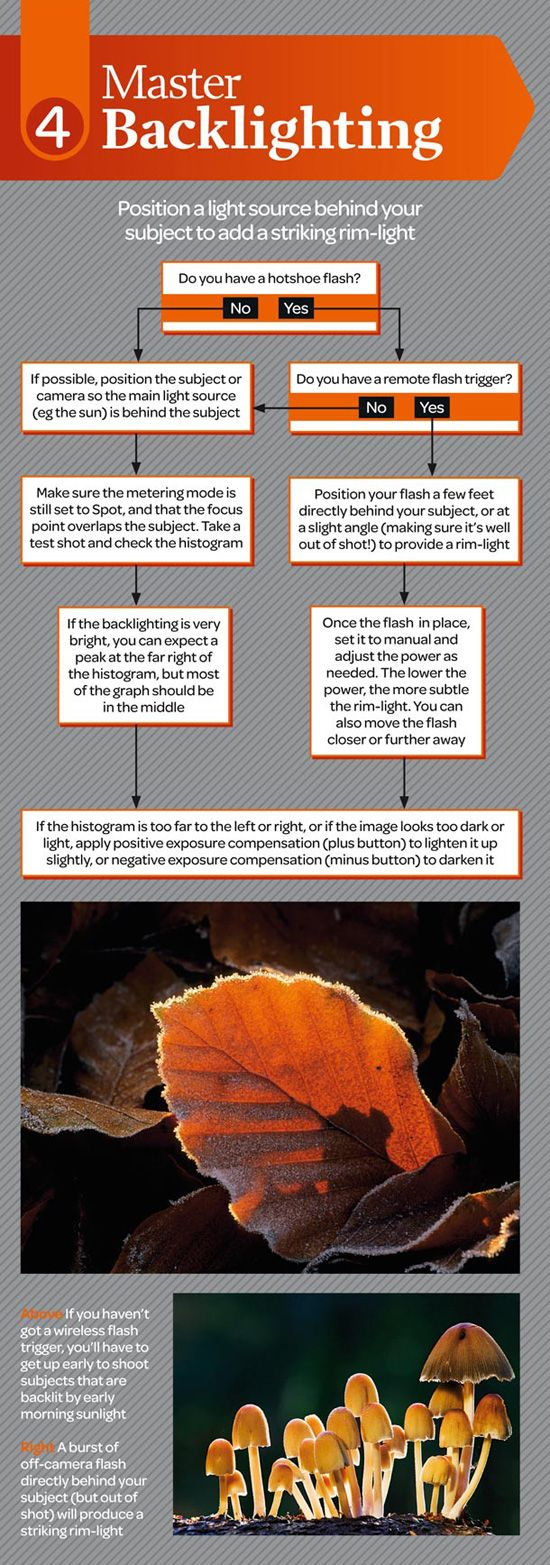 backlighting photography cheat sheet infographic