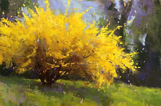 Spring Forsythia by Jacob Aguiar Pastel ~ 6 x 9