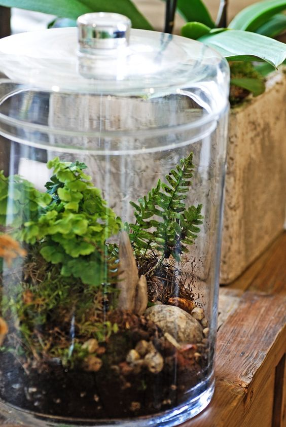 Closes lid terrarium