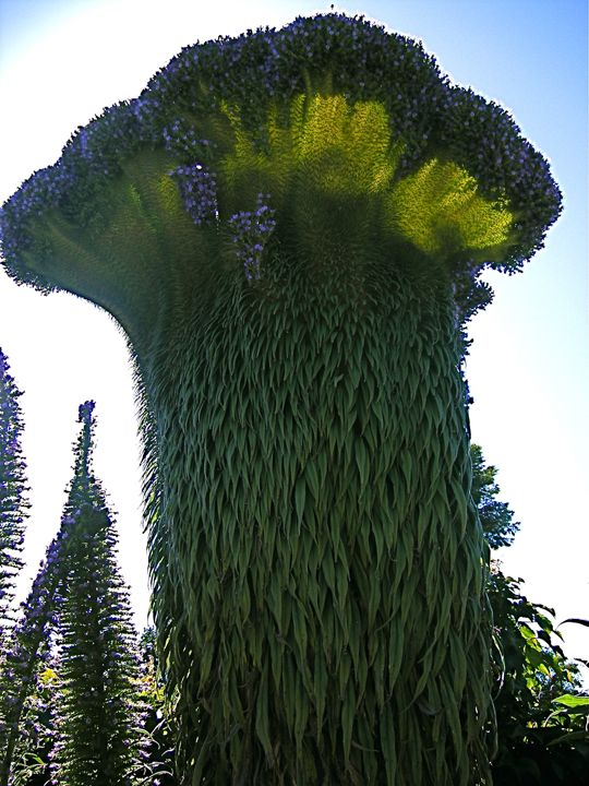 unusual Tower of Jewels plant: