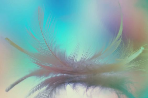 Gift of angel by Shu yoshimura on 500px