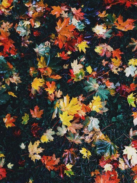 Write a creative essay on autumn/fall?