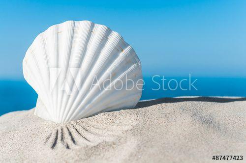 Weiße Muschel an sonnigem Sandstrand, Jakobsmuschel, Urlaubsträume, Fernweh