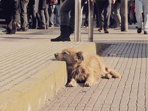 perrito con sueño by consuelathan, via Flickr
