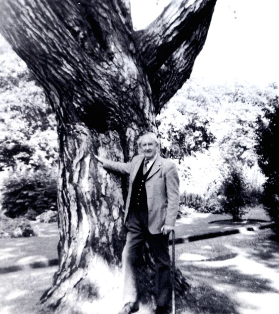 The last known photograph of Tolkien, taken by his grandson Michael on August 9th 1973. The photograph, shows the author in the Oxford Botanical Gardens leaning against one of his favorite trees, the Black Pine (Pinus Nigra), he nicknamed Laocoo.