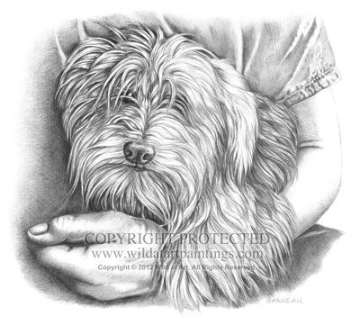 """""""Rexie"""" - Morkie (Maltese and Yorkie Mix) pet portrait 11"""" x 14"""" graphite drawing by Catherine Garneau. Commissioned by Karen V. Stefanini."""
