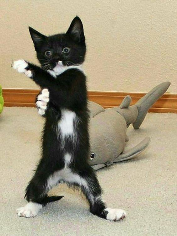 ヒーローのような変なポーズの猫