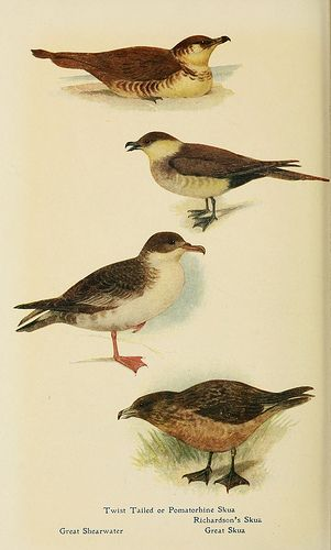 British birds in their haunts Lord Dutton (1922)