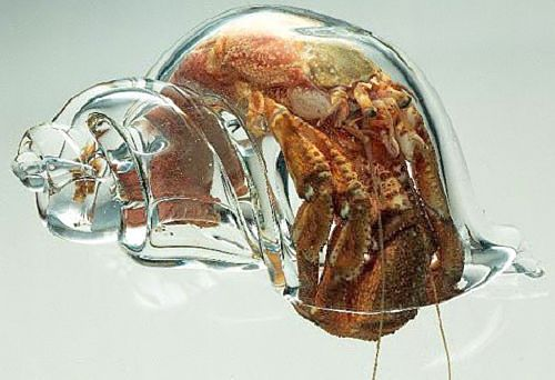 Crab in a glass shell