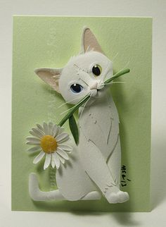 Image result for daisy cat
