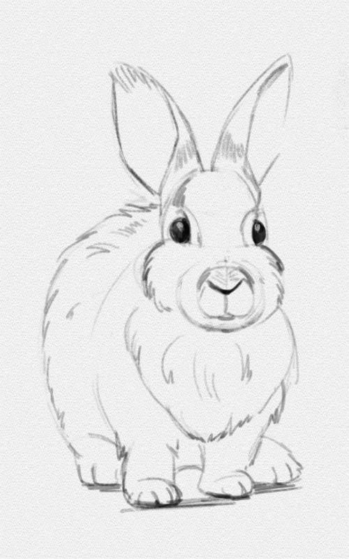 картинки для срисовки карандашом красивые и легкие животные бесплатно