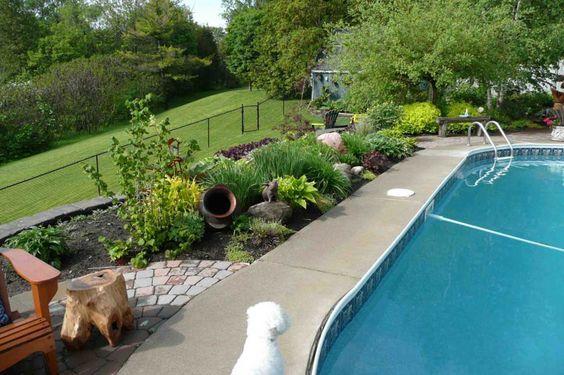 Que planter pr s d 39 une piscine jardin pinterest for Jardin que planter