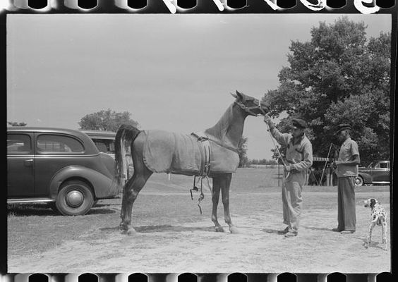 Elaborate preparations are made for entries in Shelby County Horse Show and Fair, Shelbyville, Kentucky