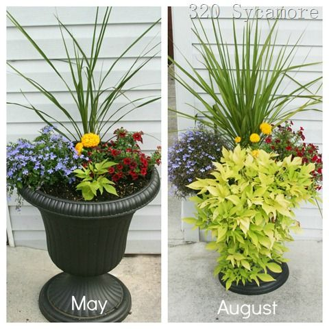 flower pot before after.  The light green is a sweet potato vine.  I like the thrill, fill, and spill idea of an arrangement.