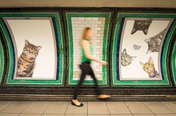 A passenger passes some of over 60 adverts in Clapham Common underground station, London, which have been replaced with pictures of cats as part of the ëCitizens Advertising Takeover Service, which aims to create a peaceful, unbranded space in the heart of London, free from commercial advertising. PRESS ASSOCIATION Photo. The posters feature cats from Battersea Dogs & Cats home and Cats Protection, as well as cats sent in by members of the public. Picture date: Monday September 12, 2016…