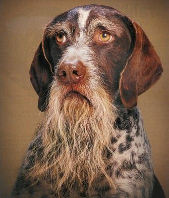 What a beautiful portrait of this dog. His beard reminds me of a Civil War General. Or maybe the Man of La Mancha.