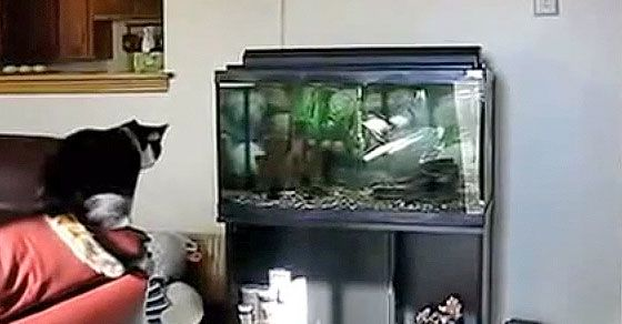 Cat Meets Aquarium