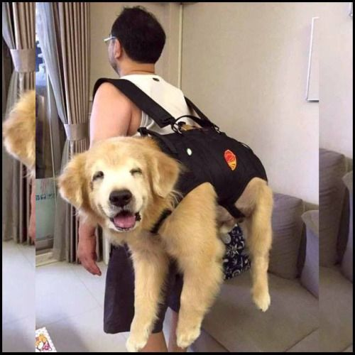 The dog backpack - Album on Imgur