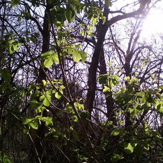 Keine Spur mehr von dem gestrigen Wintereinbruch. Heute herrliches Wetter . Schönen Nachmittag wünsche ich euch #mittwoch #schönennachmittag #niceday #landschaft #landscape #sonnigertag