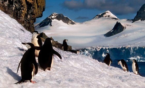Antarctica (Adeliepenguin / Dreamstime.com)