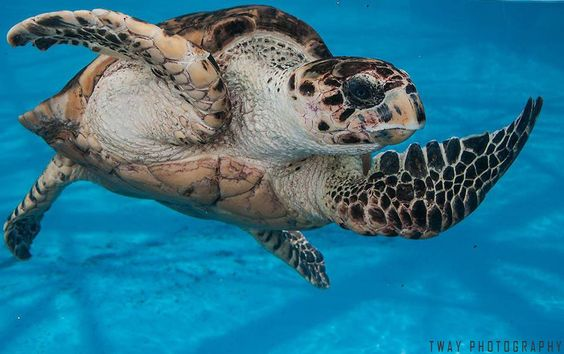 Green Turtle by Tway Photography