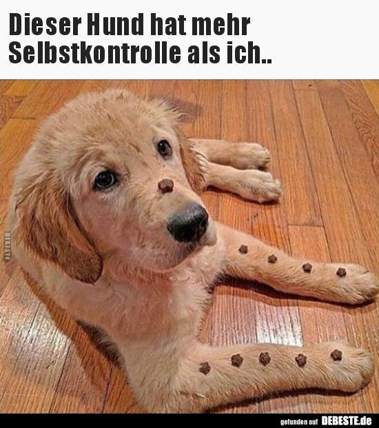 Dieser Hund Hat Mehr Selbstkontrolle Als Ich Lustige Bilder Spruche Witze Echt Lustig Lustige Hund Meme Hund Funnies Und Hund Witze
