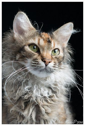 Cross Breed Of Cat And Jellyfish