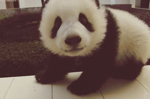 panda fofo desenho - Pesquisa Google