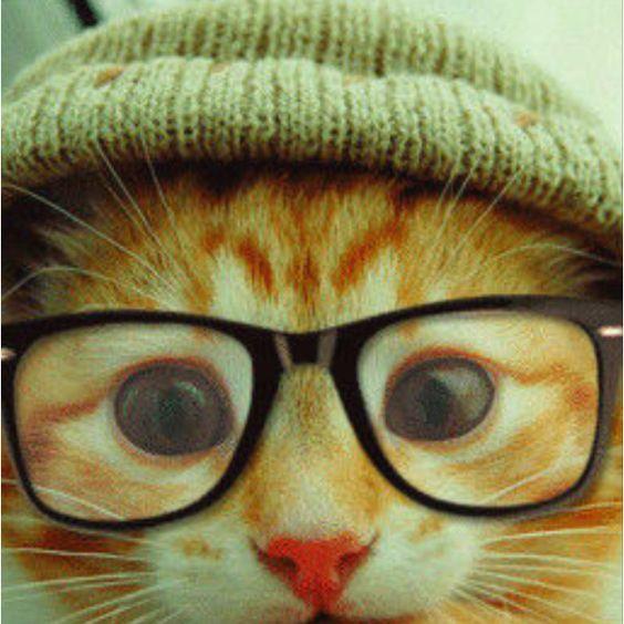 Hippie cat