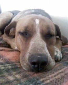 ¿ y por qué no aplicar la aromaterapia en nuestra mascota ?