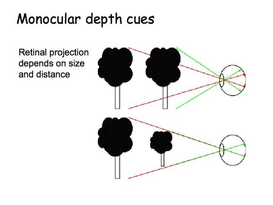 monocular cues essay psychology The normal size of the more distant person is due to a mechanism called size constancy which will be discussed later when more of the depth cues have been covered.