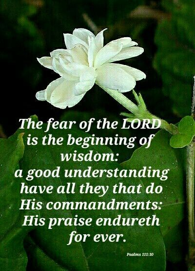 Psalm 111:10 King James Version (KJV) The fear of the Lord is the beginning of wisdom: a good understanding ha…   Inspirational scripture,  Psalms, Fear of the lord