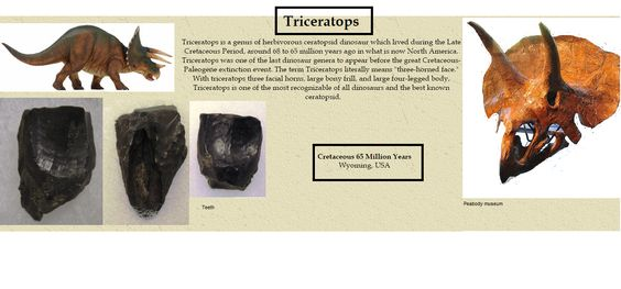 Triceratops teeth