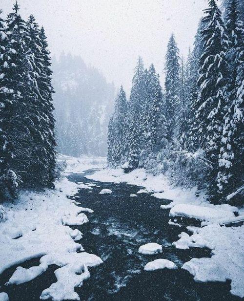 Switzerland Photo Bokehm0n Switzerland Snow Forest Nature Landscape Scenery Explore Travel Adventure Photography Wanderlog Wi Puteshestviya Priroda