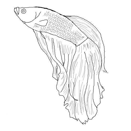 Pin Von Hannah Coffin Auf Malvorlagen Zum Ausdrucken In 2020 Malvorlagen Fisch Zeichnung Malvorlagen Tiere