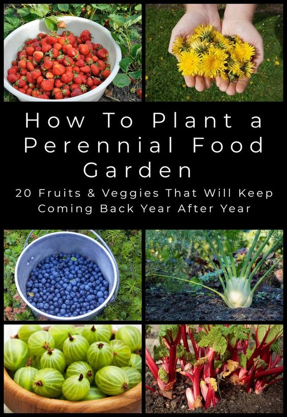 Growing vegetables and fruits in the home garden is rewarding, but many people are put off by the backbreaking work involved at the start of the growing season. Perennial edibles are the answer to this problem. Here's the 20 best edibles that you can plant once and harvest for years.