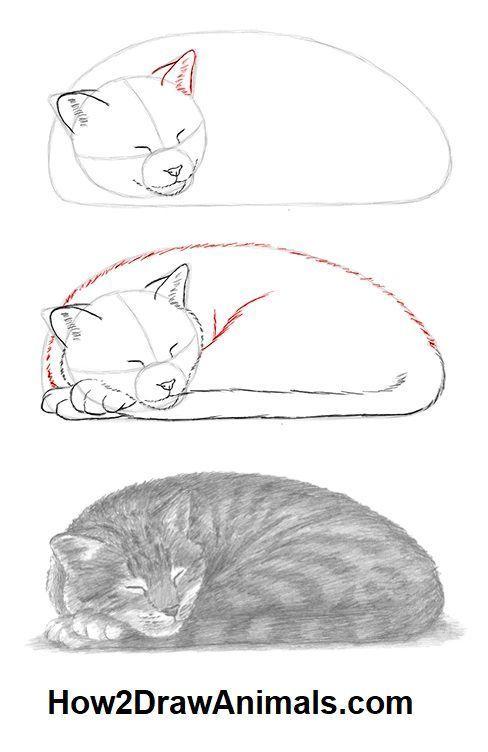 Wie Zeichnet Man Eine Schlafende Katze Katze Schlafende Zeichnet New Schlafende Katze Katze Zeichnen Katze Zeichnung Anleitung