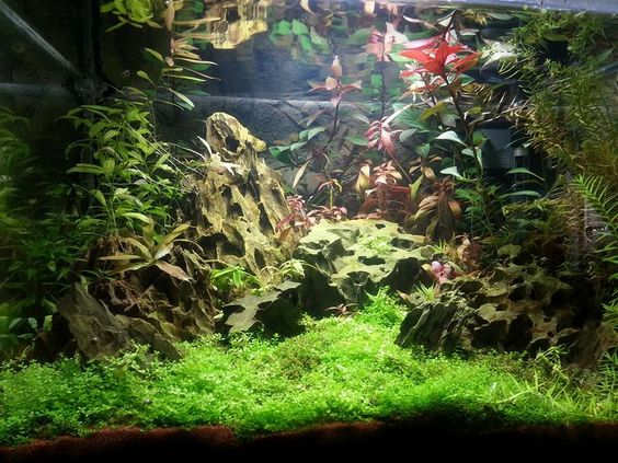 """Dragons' Sunset"" aquascaping, Dennerle Scaper's Tank."