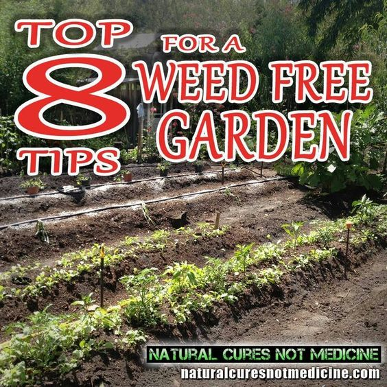 Weed free garden tips