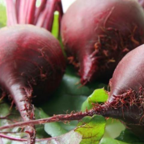 Beet Pronto Beets Beetroot Benefits Pickled Beets