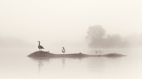 nature photography fog foggy landscape birds by NicholasBellPhoto