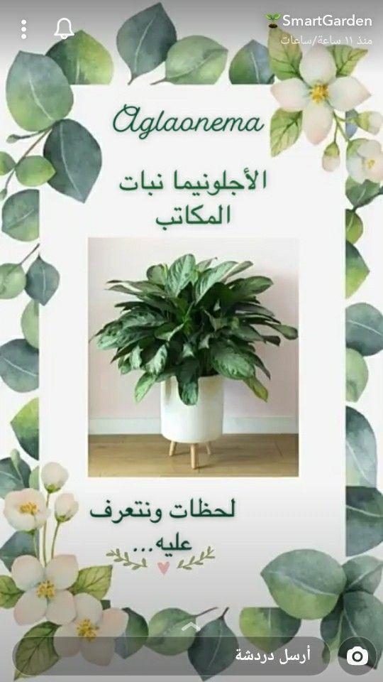 Pin By زهرة النرجس On تنسيق زهور In 2021 House Plants Indoor Indoor Plants Trees To Plant