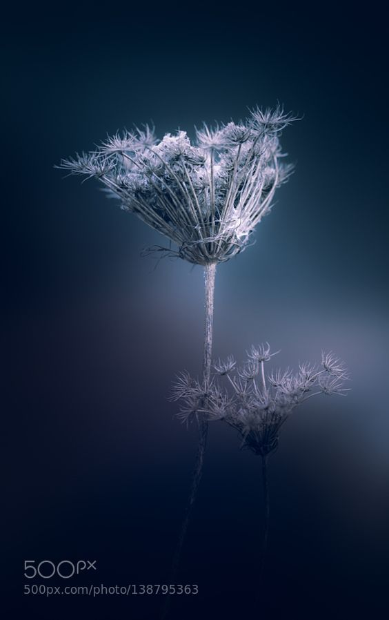 Ghosts In The Wind by paulbarson. @go4fotos