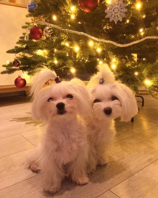 Christmas Cuties Christmas Animals Pet Holiday