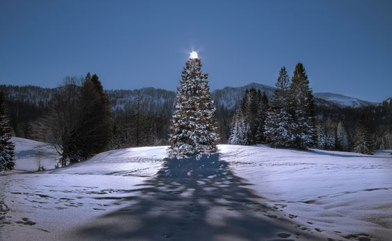 Christmas tree by Marvin Diehl, via 500px