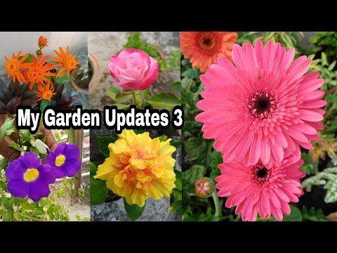 Maxican Flamevine Youtube In 2020 Hibiscus Gerbera Garden