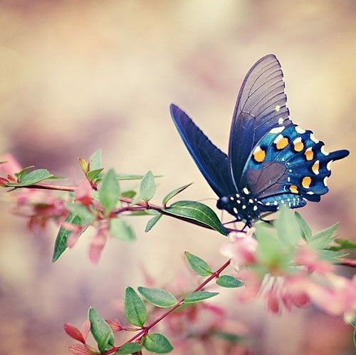 butterfly by candice  so beautiful