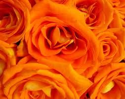 Bright Orange flowers for the centerpieces and bouquet's.