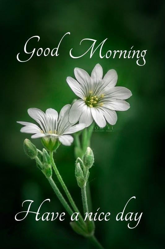 గుడ్ మార్నింగ్   Morning pictures, Good morning picture, Good morning